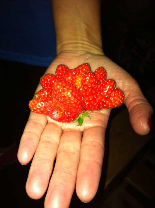 världens största jordgubbe